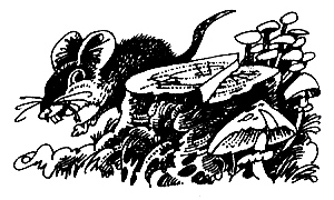 http://cat-warriors.narod.ru/scannings/russian_pic/general_books/end/1_5.jpg